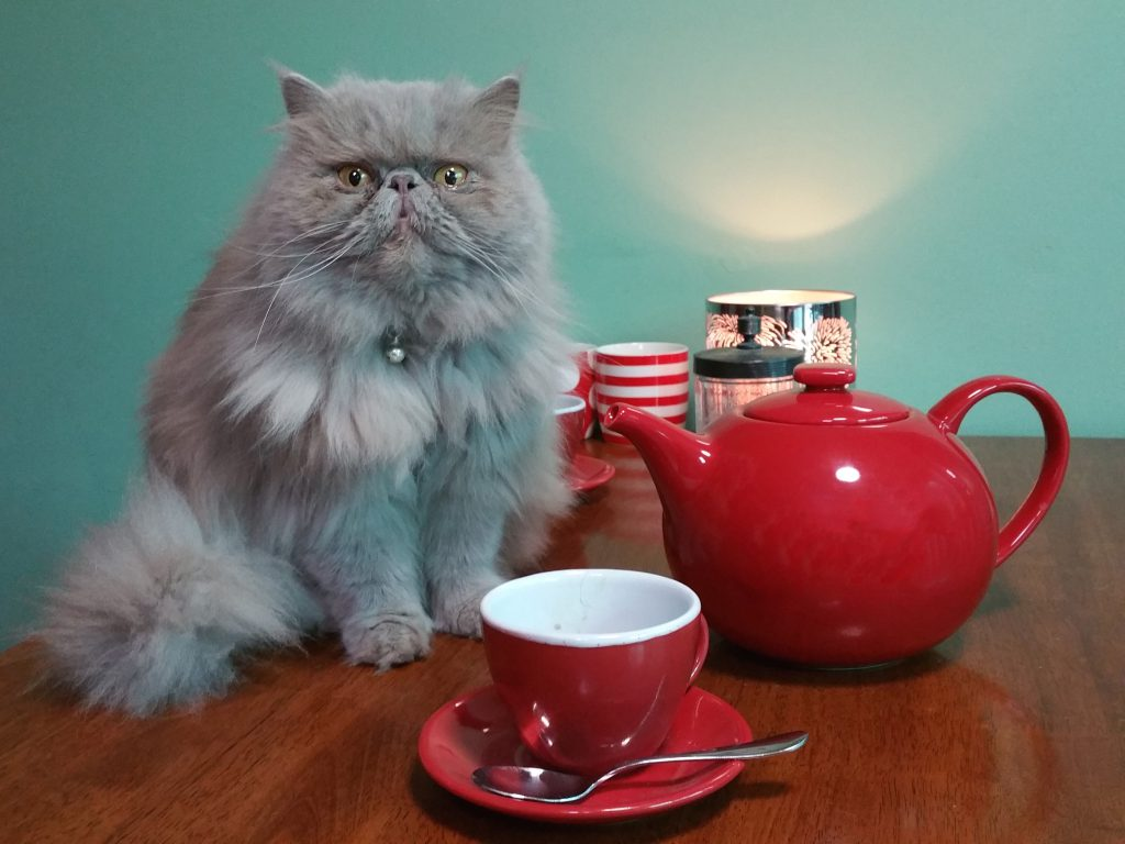 Cat with teapot and cup