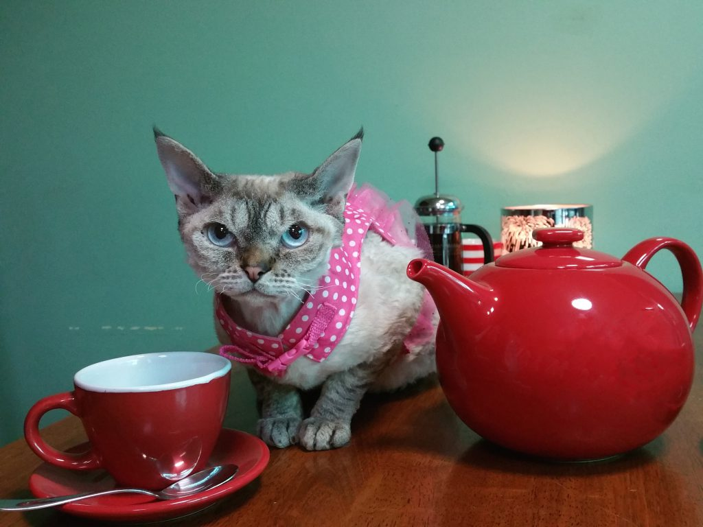 Cat with teapot and cup 2