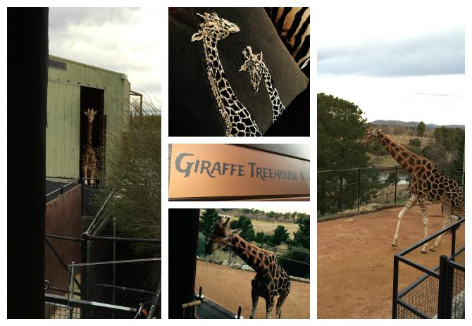 GiraffeJamala