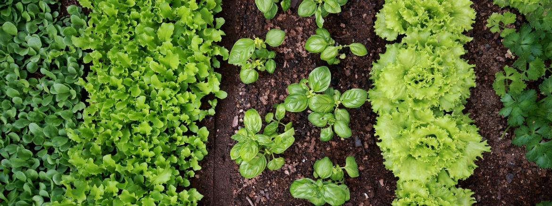 vegetable garden slider