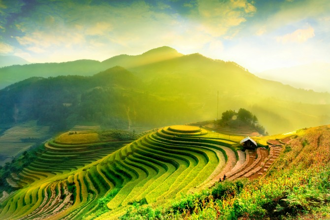 rice fields feature