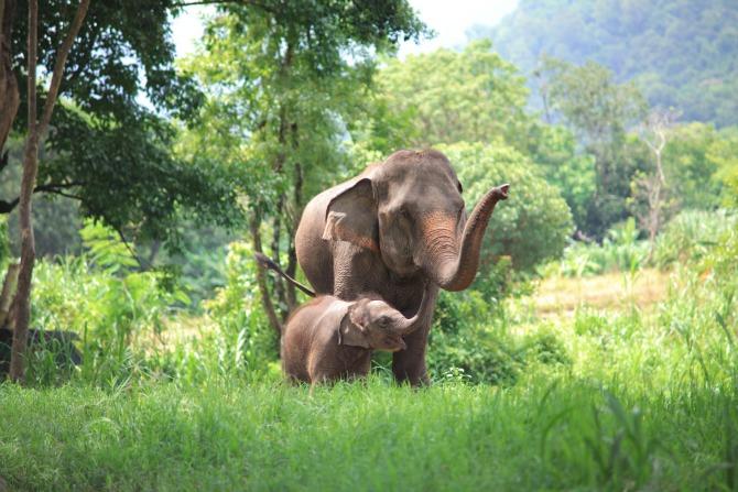 elephants feature