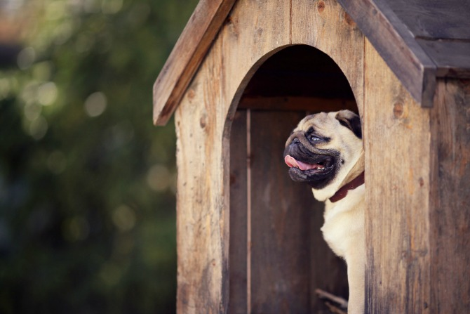 in the doghouse feature