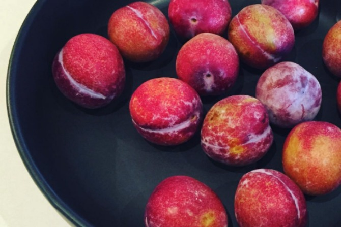 The usual post-school sweet treats were swapped with plums.