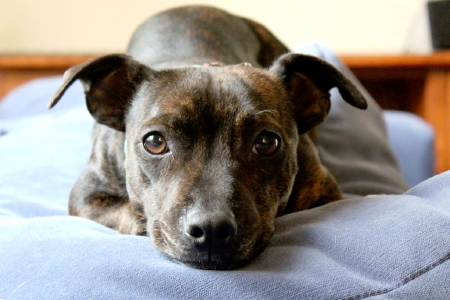 Tetley, who is available for adoption