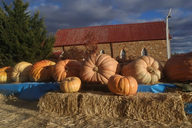 pumpkin festival feature