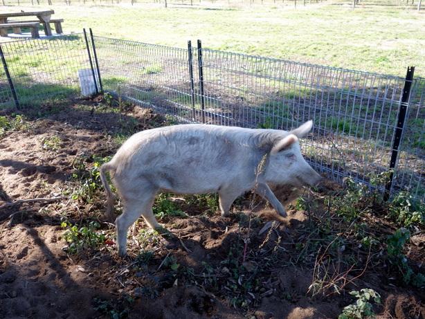 Truffle Farm Olivia1