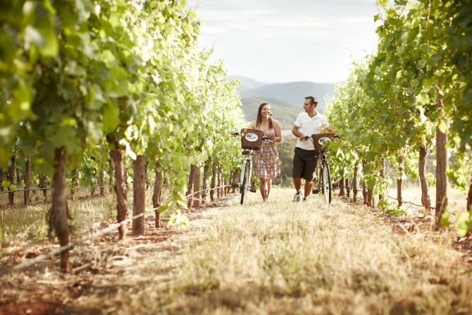 King_Valley_Vineyard_with_bike