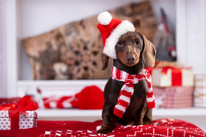 sausage-dog-christmas_feature