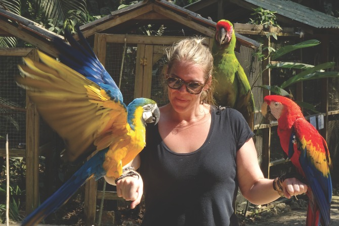 Macaw rehabilitation in Honduras