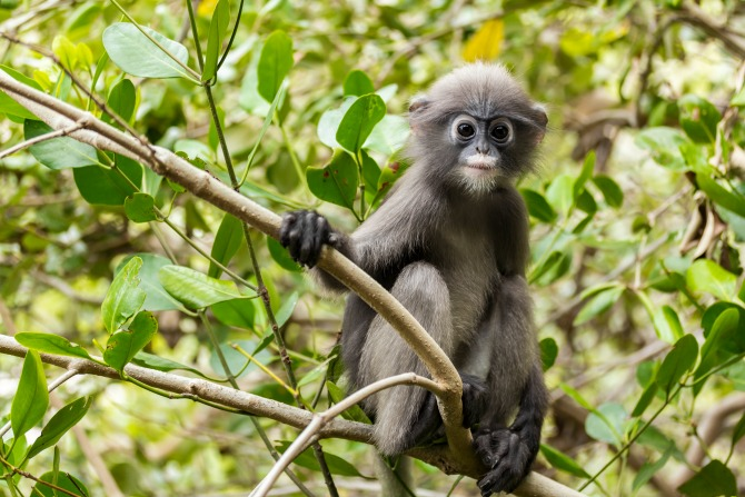 monkey-tree-animal_feature