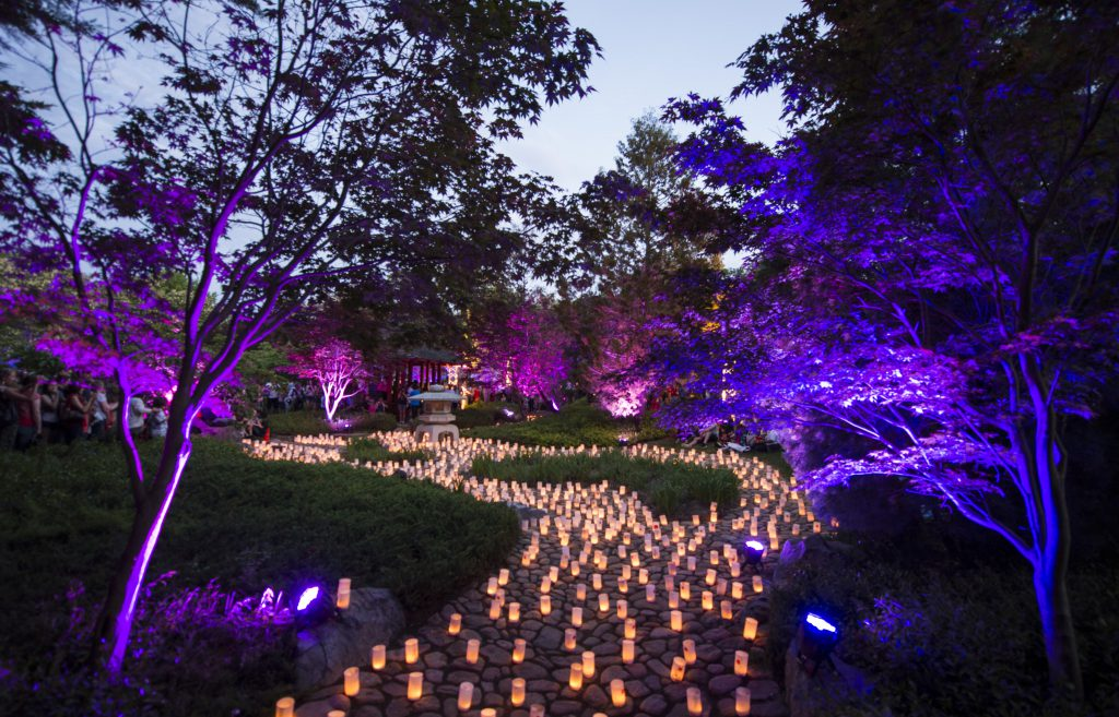 The Nara Park during the Canberra Nara Candle Festival. Image: Martin Ollman