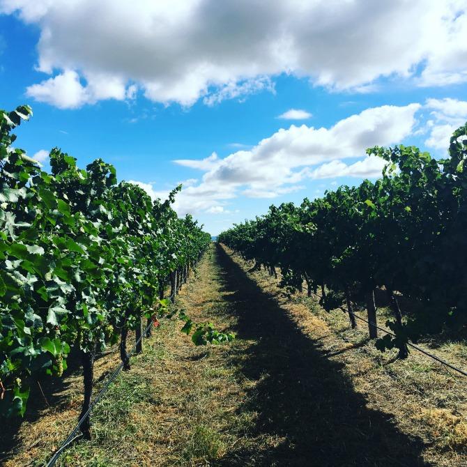 Balmoral vineyard