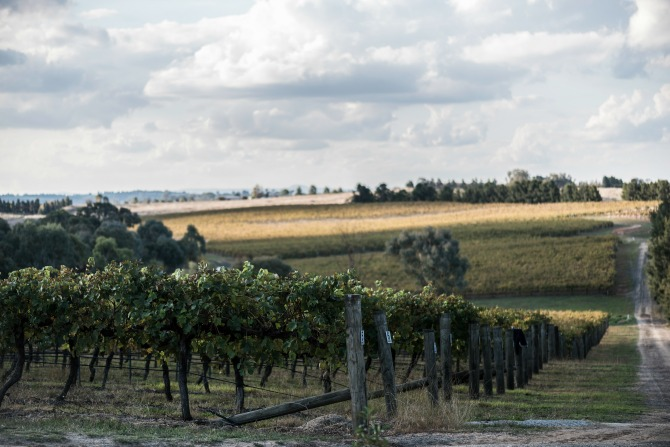 Grove Estate Winery_TimBeanPhotography_