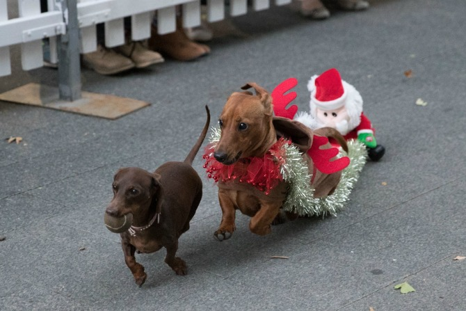sausage dogs_feature_InTheCity