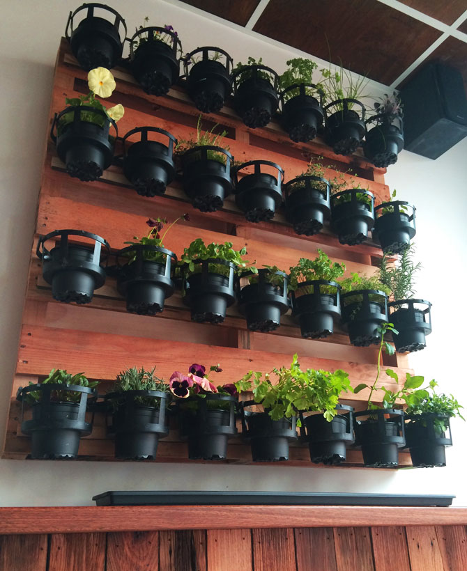 A vertical garden of herbs and plants adorns the wall.