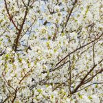 Eight Canberra 'grammers to get you excited for spring