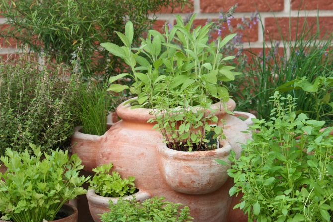 Sustainable Life: Grow herbs in a pot