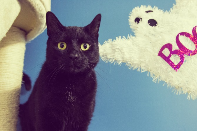 Cat Lovers Unite for the First Canberra Cat Film Festival