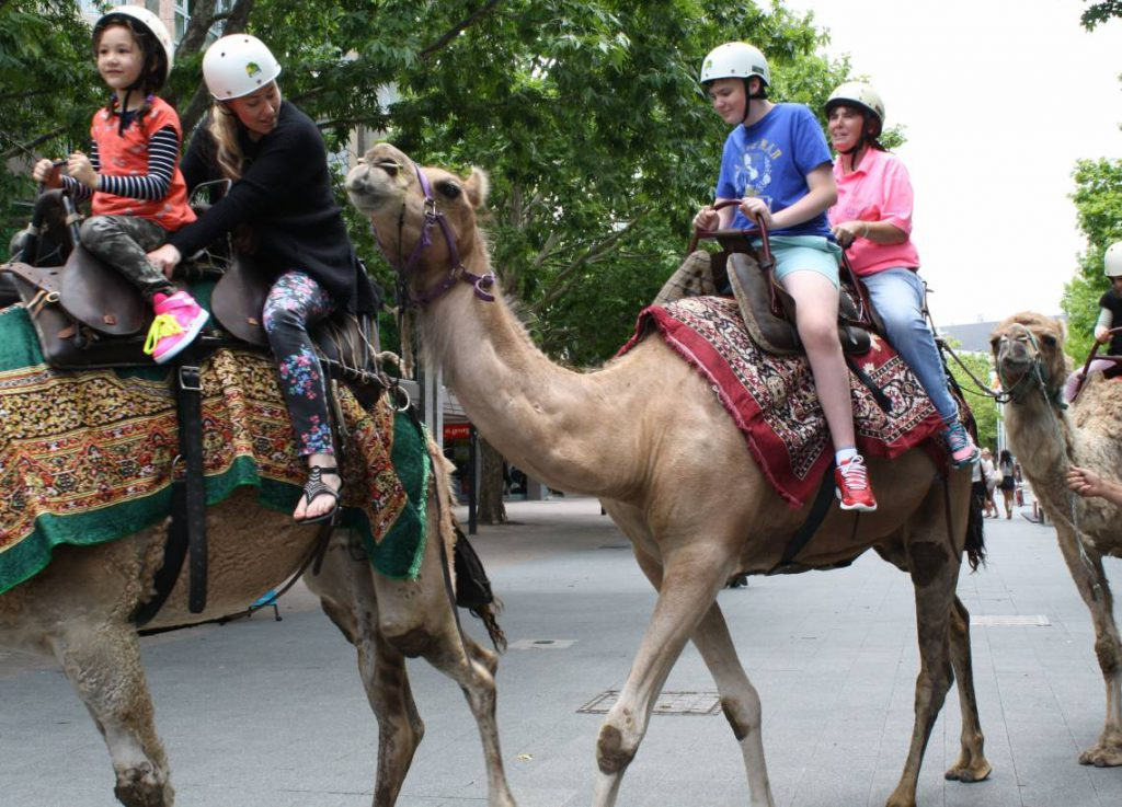camels christmas in the city
