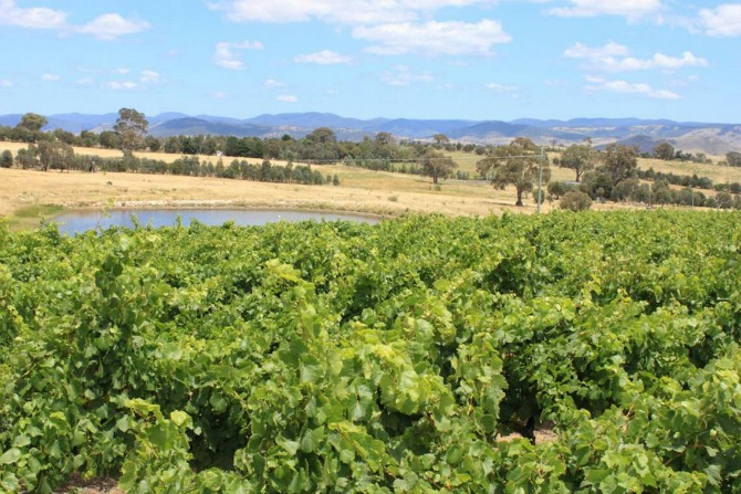 Vino for Valentines Day: Canberra Winery Tours