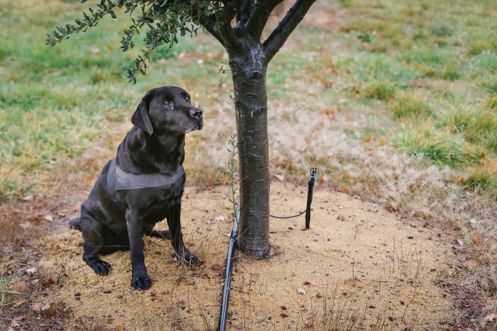 TheTruffleFarmdog