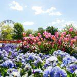 Everything you need to know about Floriade: Reimagined