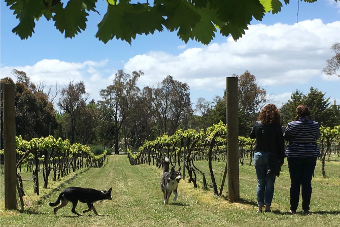 Dog friendly wineries? Yes it's true!