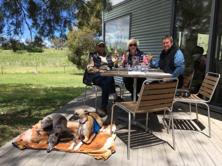 CDW whippets and guests relaxing at Surveyor's Hill Vineyards.