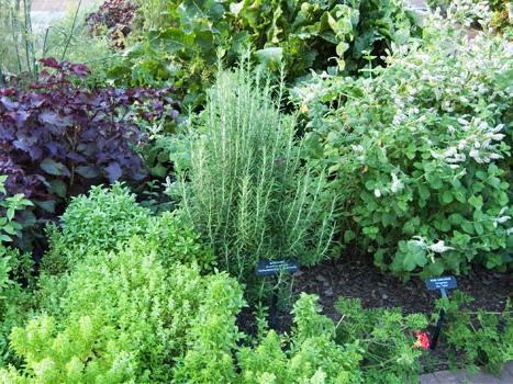 The Pialligo Estate Kitchen Gardens