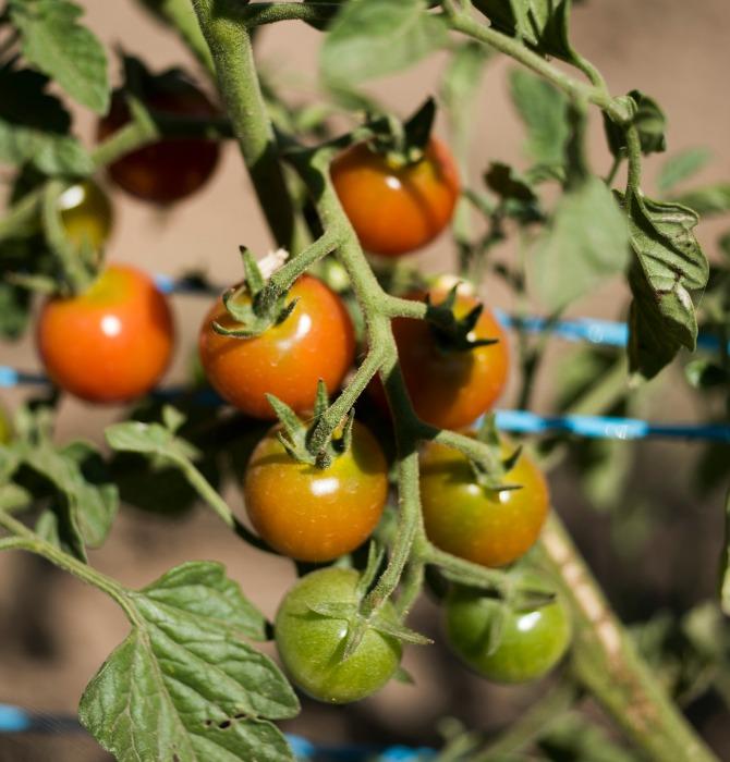 Fig Tree Farm in Wee Jasper_MartinOllman_1