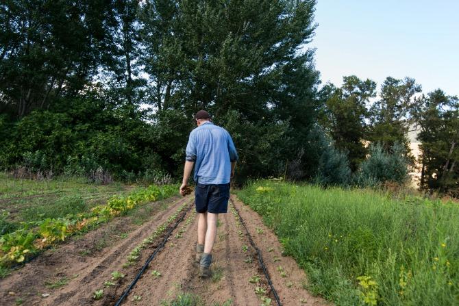 Fig Tree Farm in Wee Jasper_MartinOllman_6