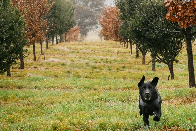 Time to stop and smell the truffles