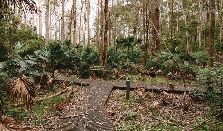 Durras Lake discovery trail and walking tracks, Murramarang National Park. Photo: D Finnegan for Skip to contentNSW National Parks and Wildlife Service.