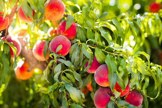 Sustainable life: How to grow your own fruit in every season