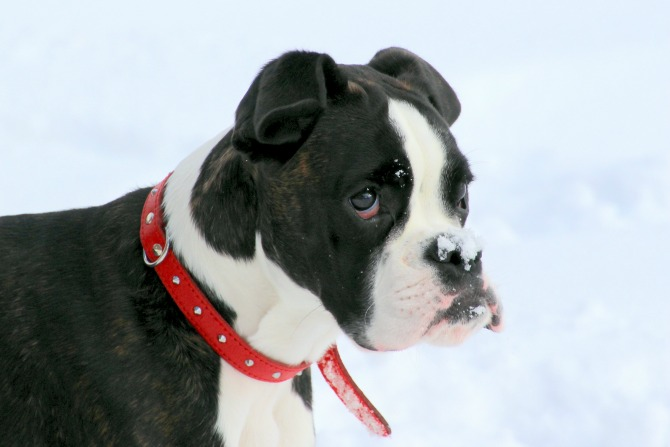 Corin Forest is having a Snow Dogs weekend!