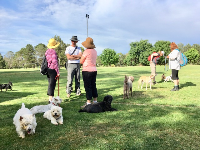 Our bumper guide to play spaces for every Canberra dog
