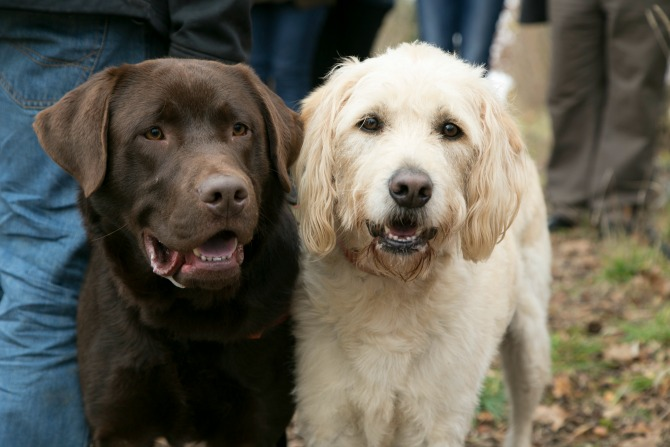 The ultimate foodie day out for dog lovers