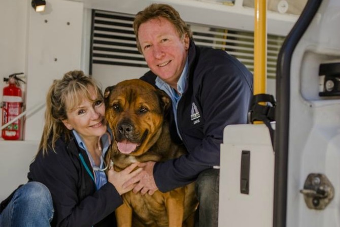 Meet the couple behind Canberra's Pet Ambulance