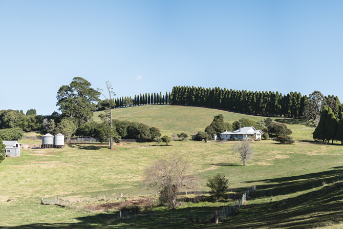 The Southern Highlands: free to wander