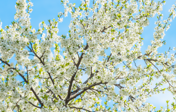 12 healthy habits to celebrate spring
