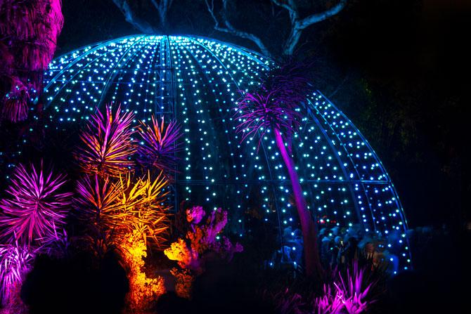 NightFest to showcase a World in Bloom