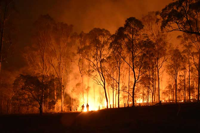 2020 bushfire disaster: five simple ways to help