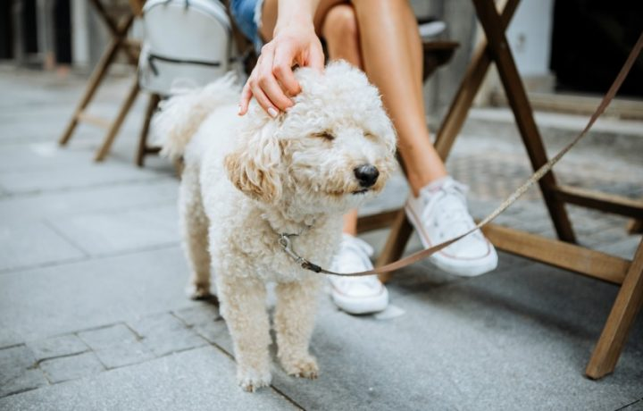 A guide to dog-friendly Canberra