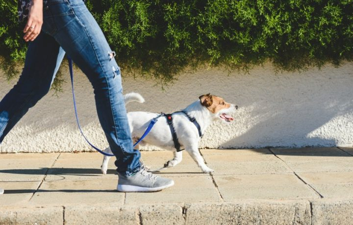 Walking a dog takes time. Do you have enough?