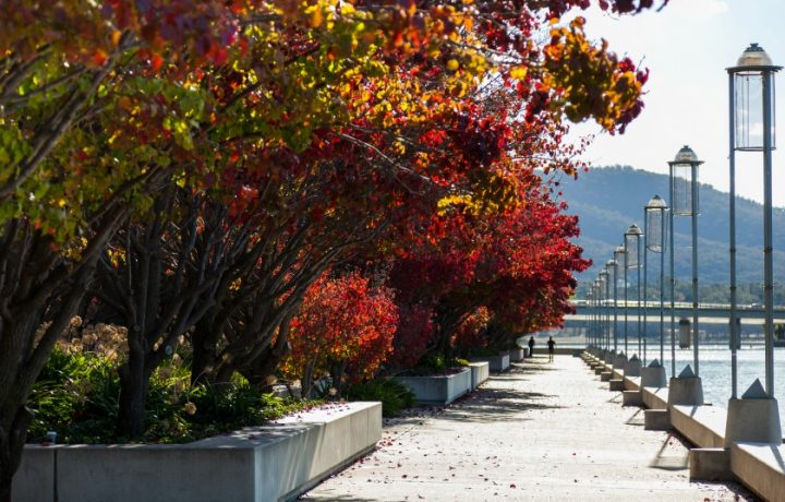 You won't be-leaf this Canberra Autumn Leaves Map