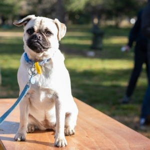 Dog parties and wine bars: Haig Park activations return for spring