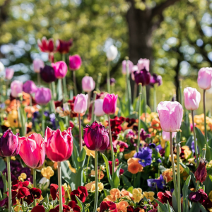 Floriade's blooms are still in Commonwealth Park so put the petal to the metal
