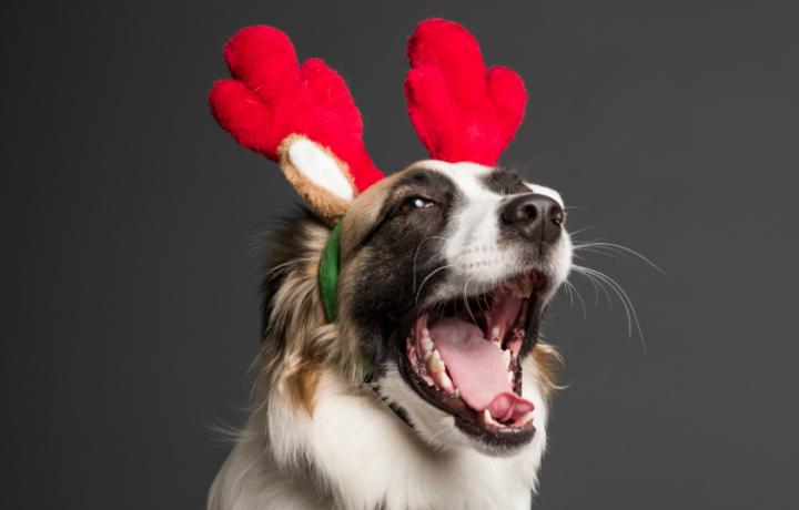 14+ ways to donate locally this Christmas