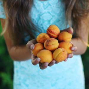 Sustainable Life: Stone fruit harvest recipes